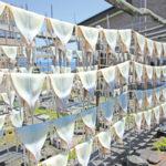 イカのカーテン_食_鰺ヶ沢町